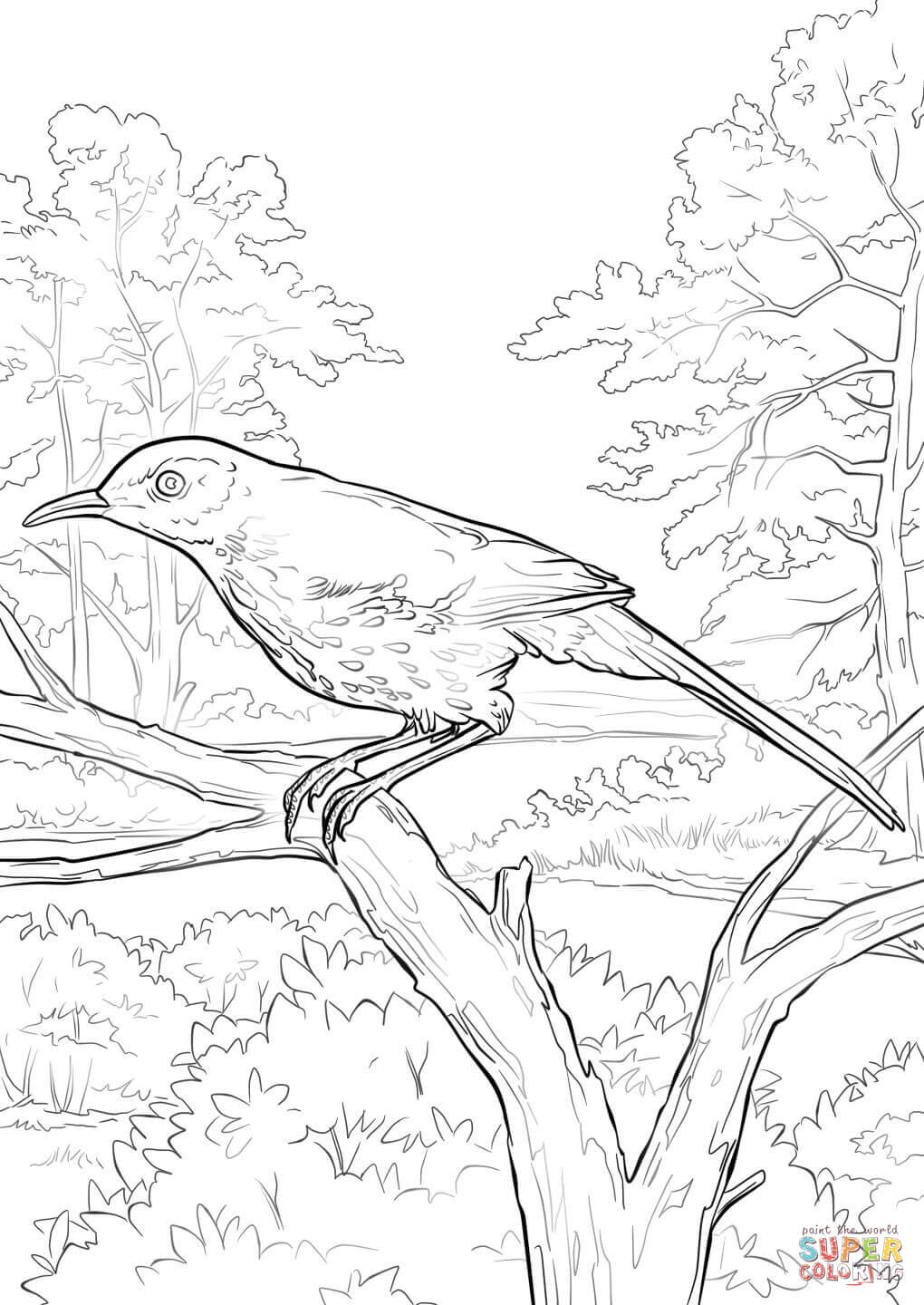 1020x1440 Brown Pelican Coloring Sheets Thrasher Page Pages