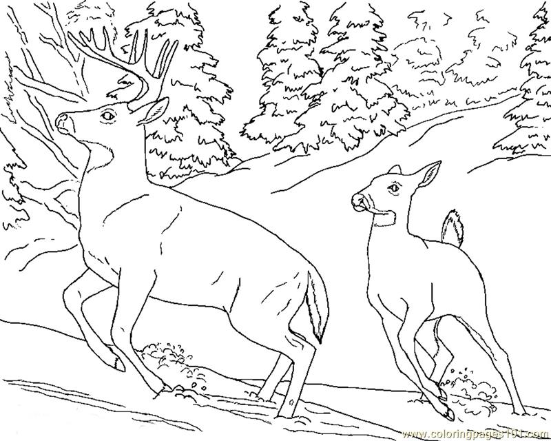 800x640 Deer Doe Buck Snow Coloring Page