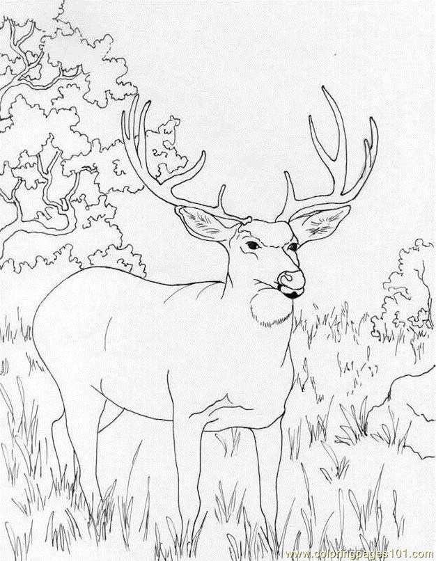 626x806 Muledeer Coloring Page