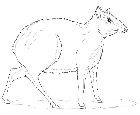480x394 Red Deer Coloring Pages Download And Print For Free Free Red Deer