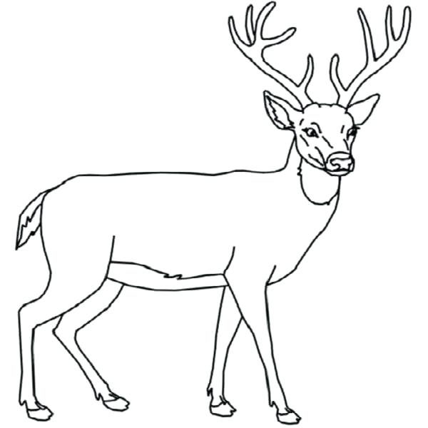 600x600 Whitetail Deer Coloring Pages Astounding Whitetail Deer Coloring