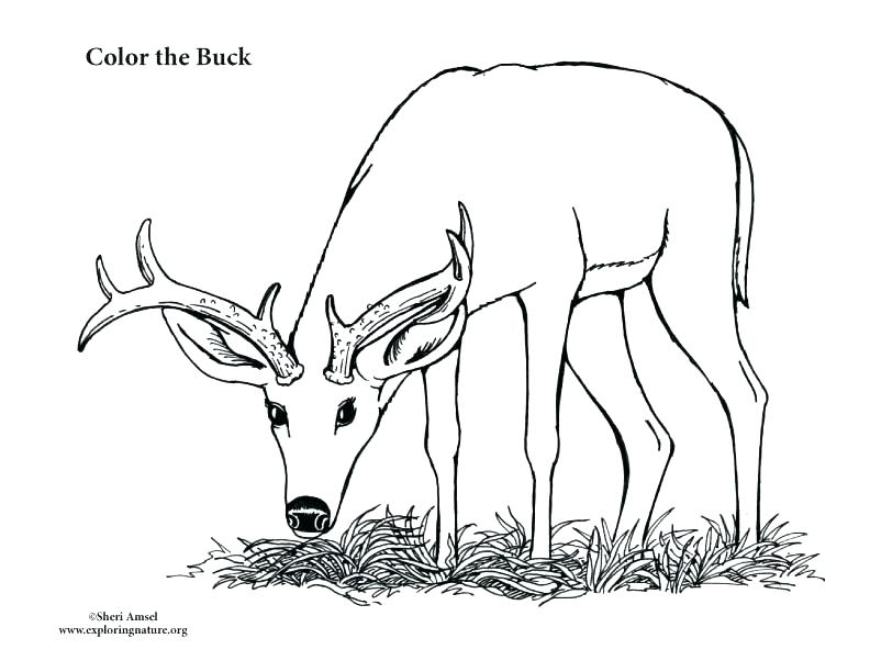 792x612 Deer Hunting Coloring Pages