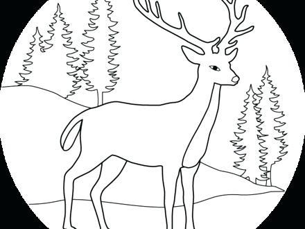 440x330 Baby Deer Coloring Page Free Deer Coloring Pages Baby Deer