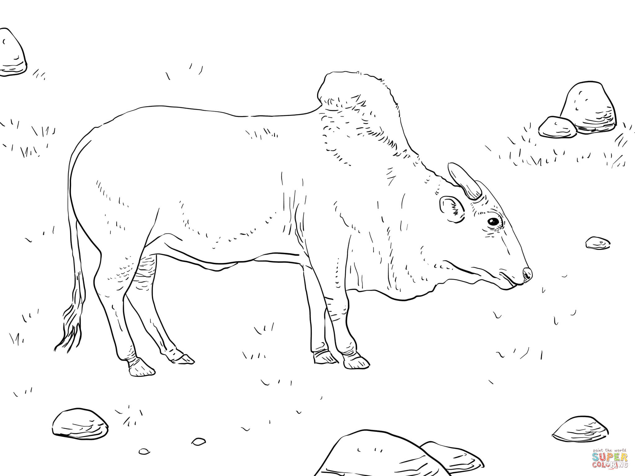 2048x1536 Growth Bucking Bull Coloring Pages Brahma Page