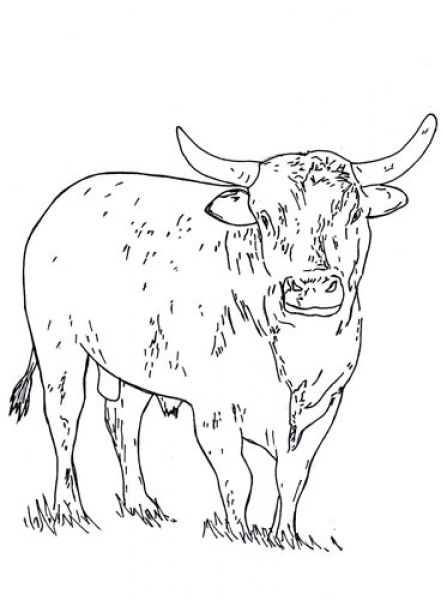 441x600 Old Fashioned Rodeo Bull Coloring Pages Mold