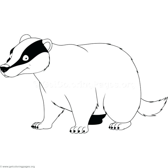 700x700 Badger Coloring Pages Badger Coloring Pages Bucky Badger Coloring