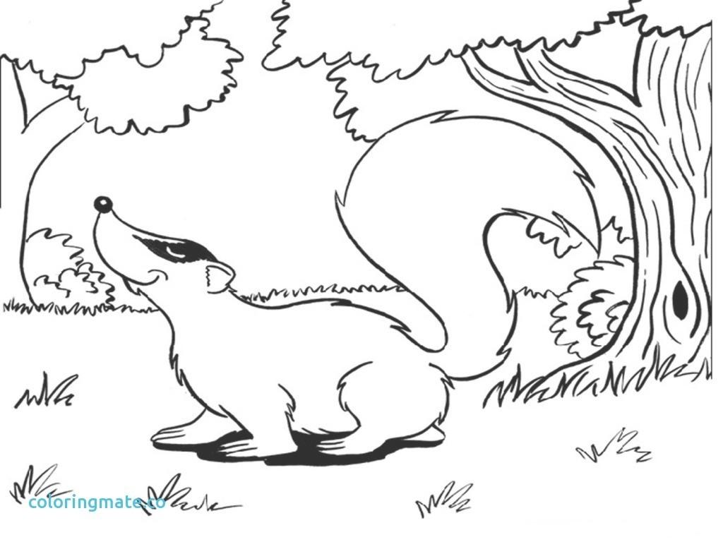 1024x768 Contemporary Badger Coloring Page Motif