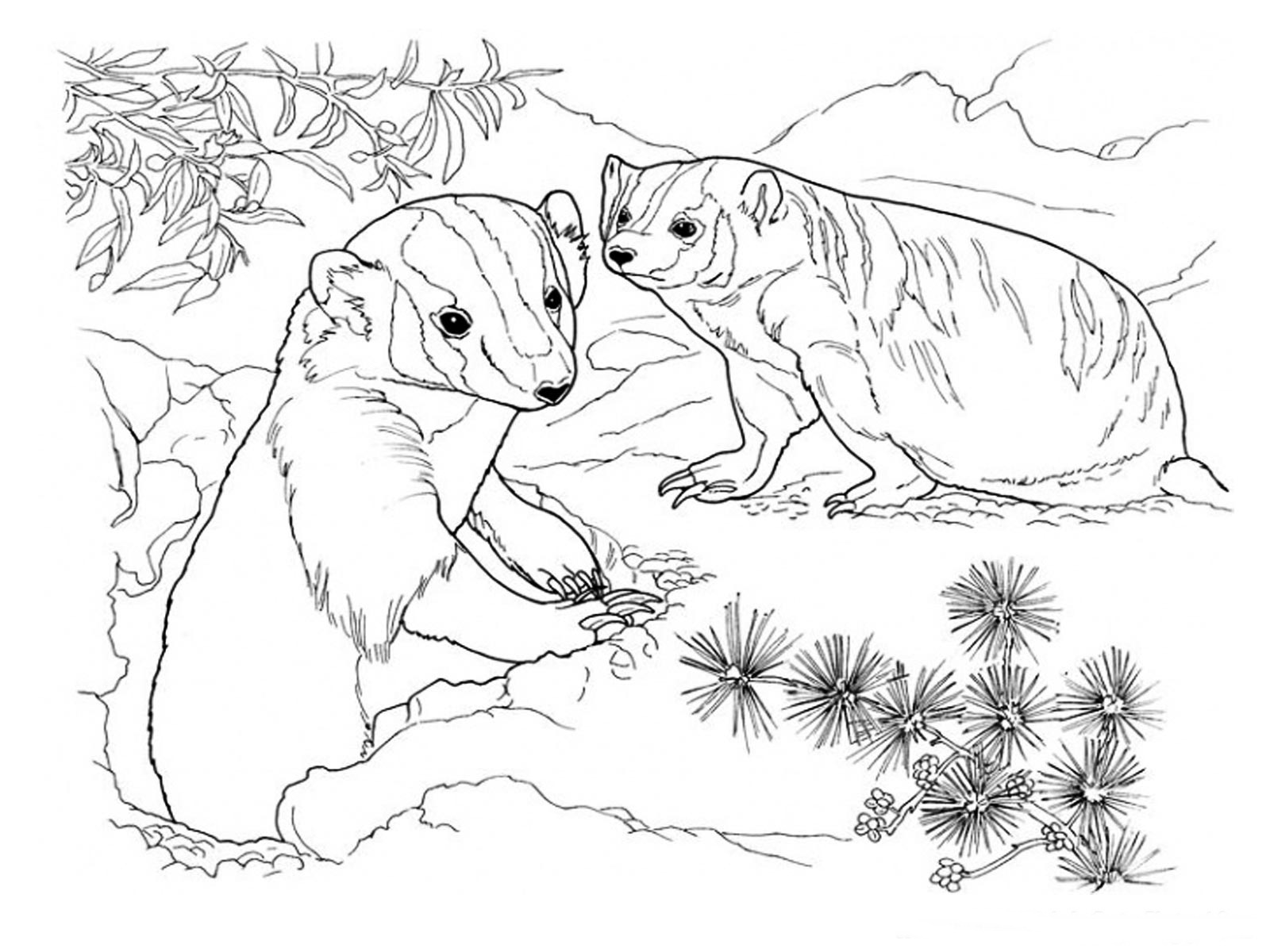 1600x1200 Luxury Badger Coloring Page Pictures