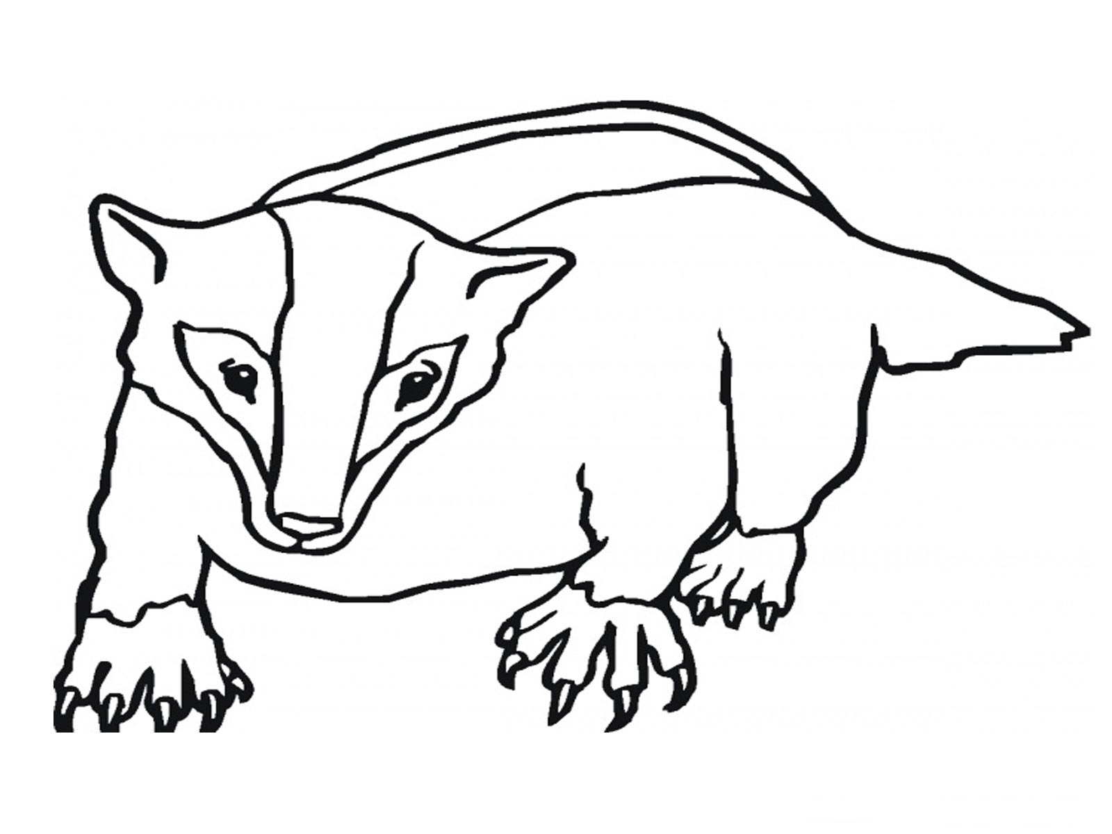 1600x1200 Badger Coloring Page