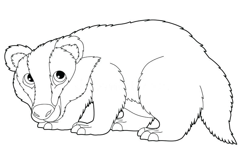 800x541 Badger Coloring Page Badger Coloring Page Badger Coloring Pages