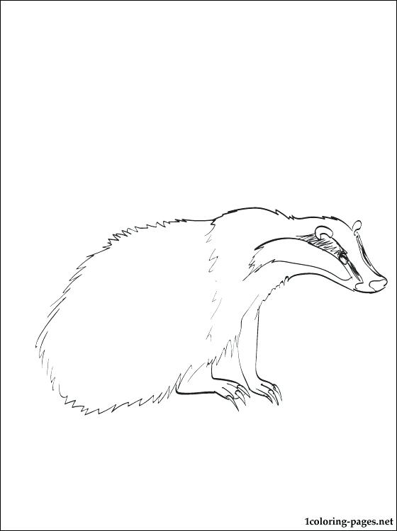 560x750 Badger Coloring Page Honey Badger Coloring Pages