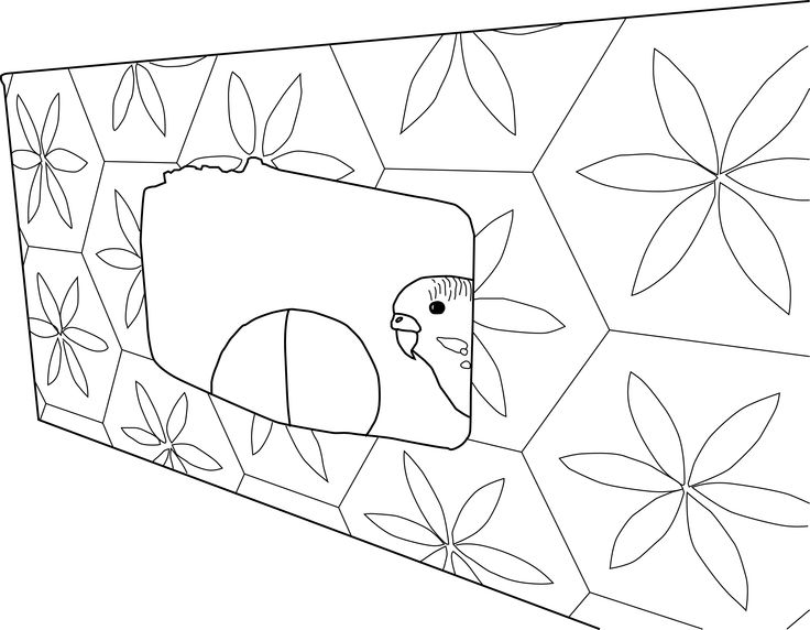 Budgie Coloring Pages