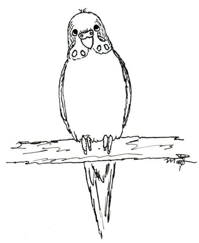 653x799 Budgie Coloring Pages