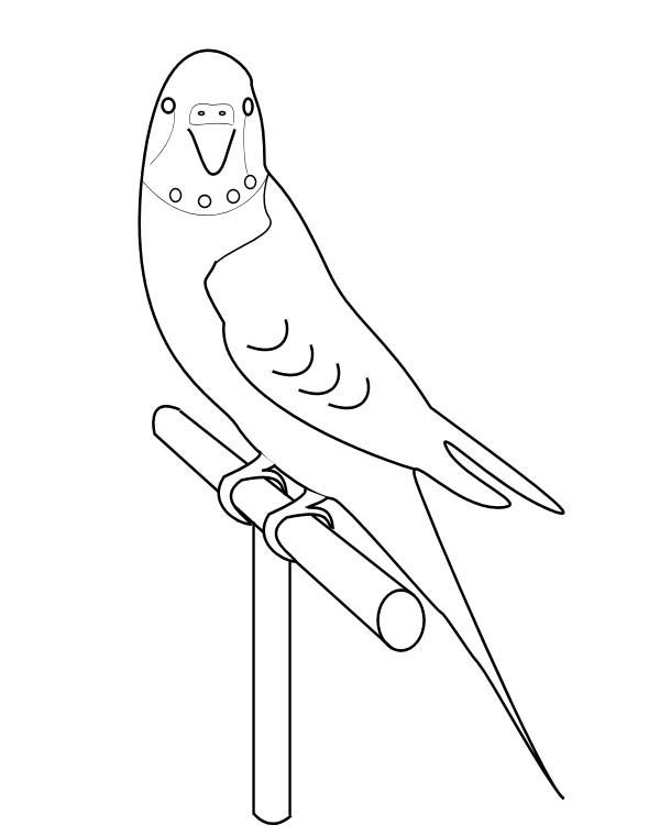 600x760 How To Draw Parakeet Coloring Page Artesanato