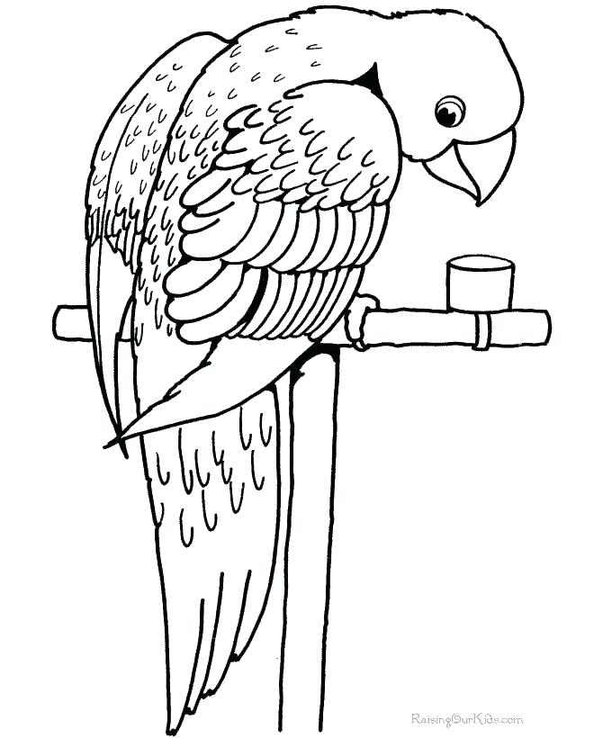 670x820 Macaw Coloring Page Ing Mcw Nd Mcw Ing S Flying Macaw Coloring