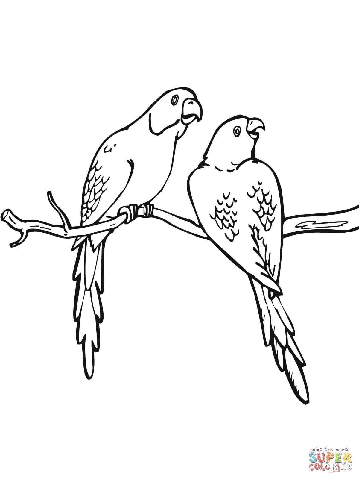 1200x1600 New Parakeet Coloring Pages Design Printable Coloring Sheet