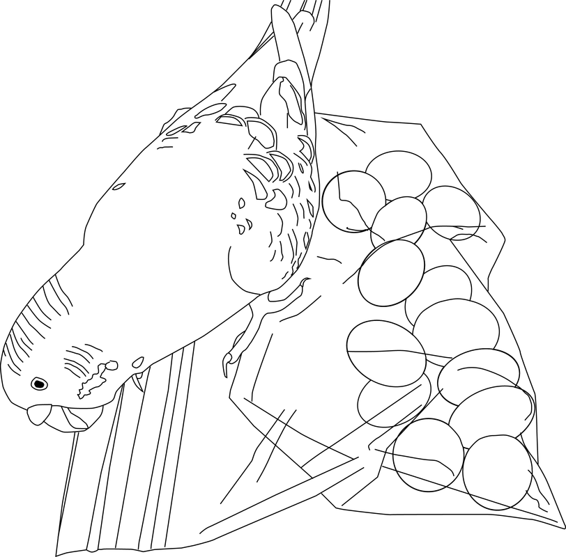 812x800 Parakeet Coloring Pages