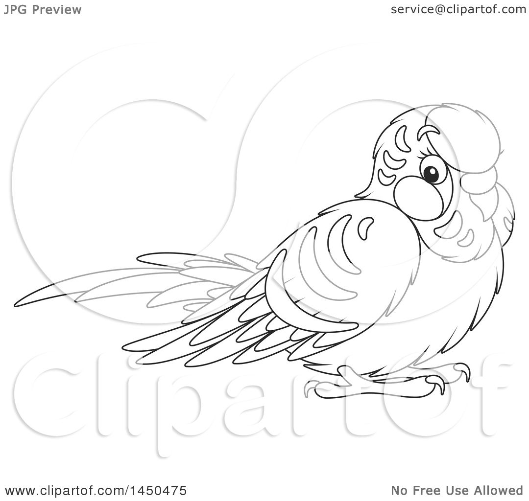 1080x1024 Parakeet Coloring Pages Episode The Early Birder Gets The Bird U