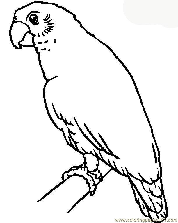 612x770 Parrot Coloring Page