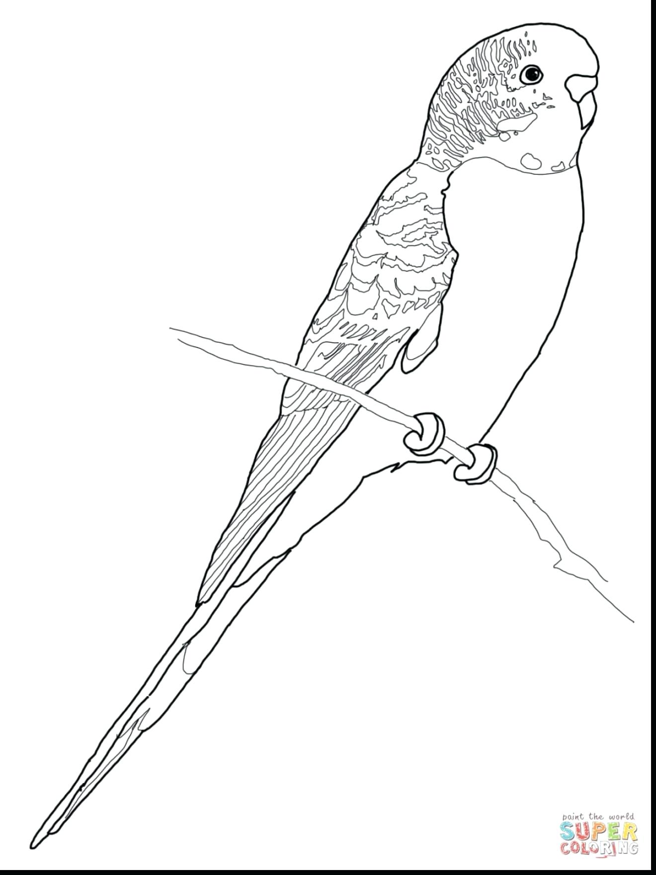 1320x1760 Unsurpassed Parakeet Coloring Pages Just Arrived Budgie Parrot