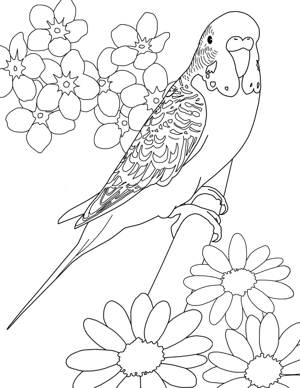 1000x1294 Budgie Color Page