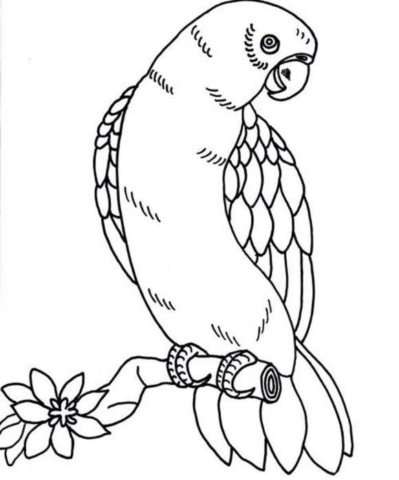 580x698 Bird Coloring Page Parrot Repujado