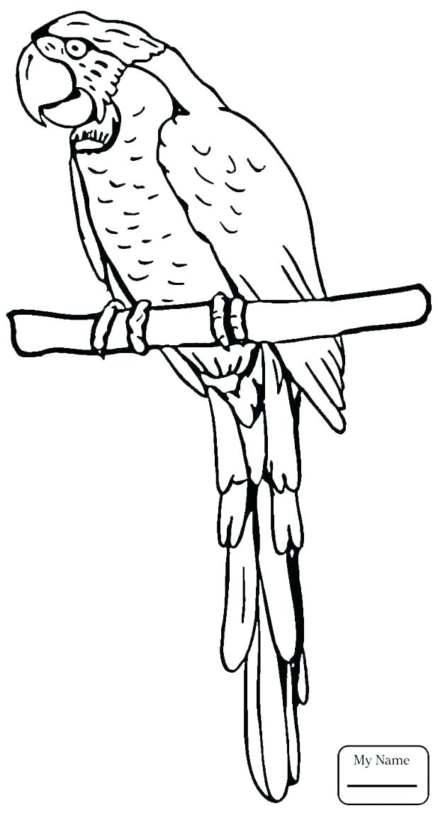 618x1154 Coloring Pages Birds Flying