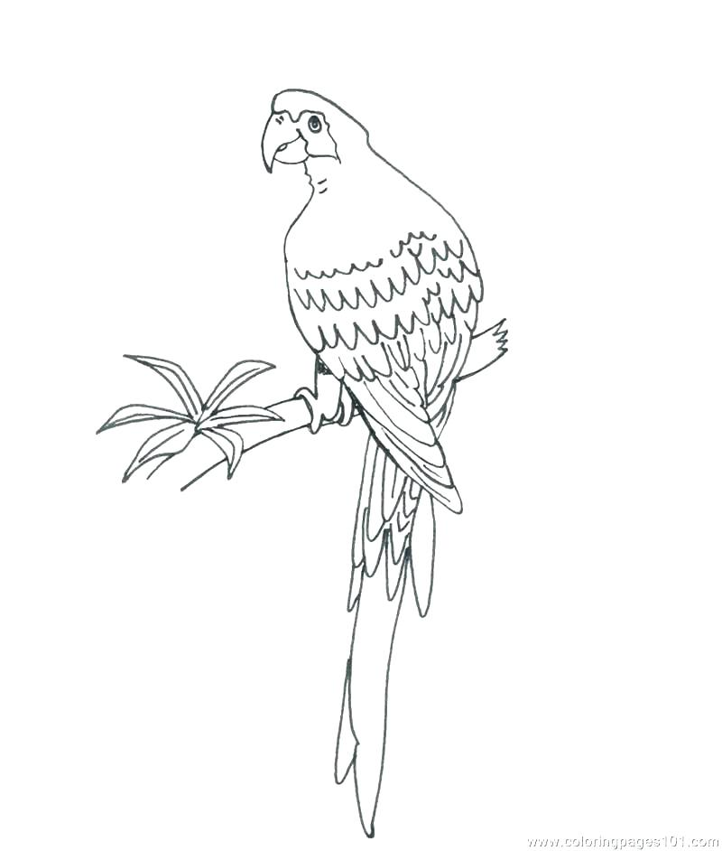800x942 Parrot Pictures To Color