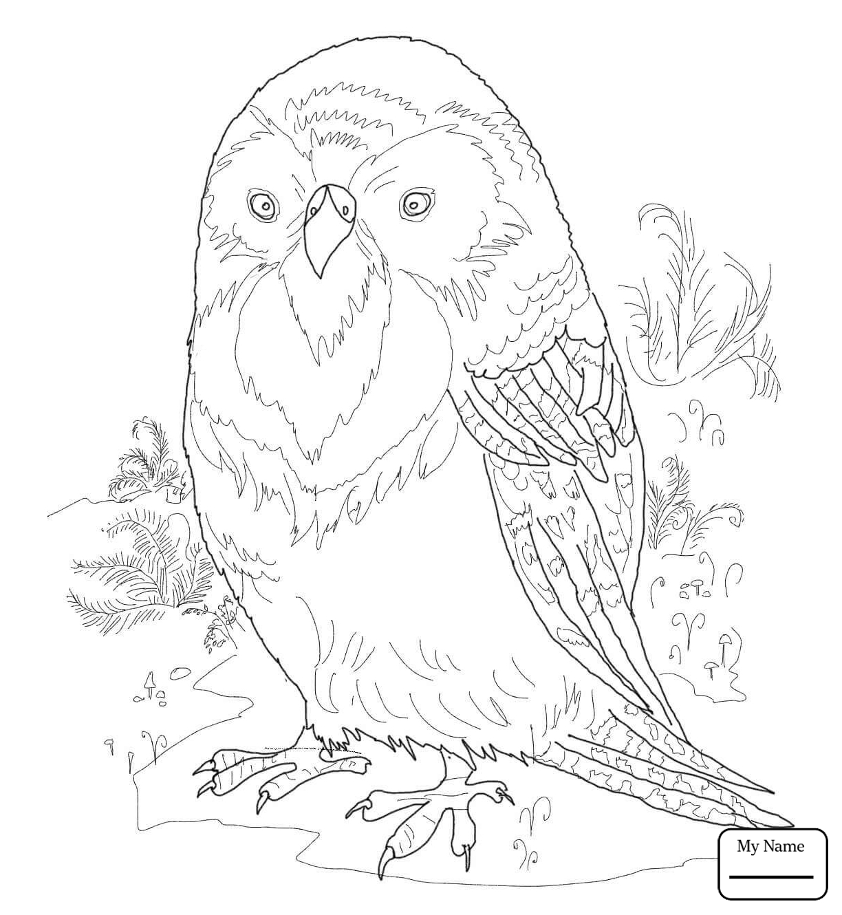 1224x1330 Budgie Coloring Pages Collection Coloring For Kids