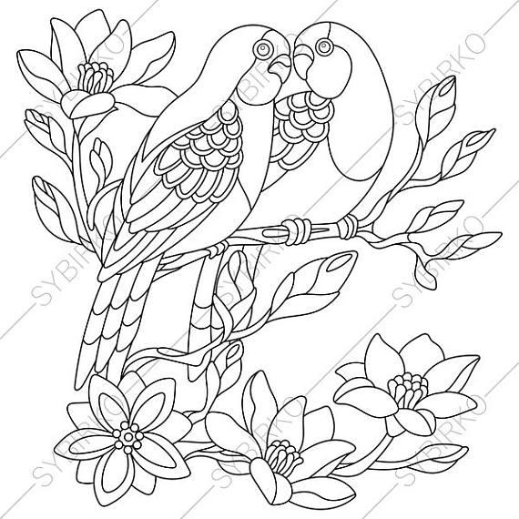 570x570 Budgie Parakeet Parrots Adult Coloring Book Page Zentangle
