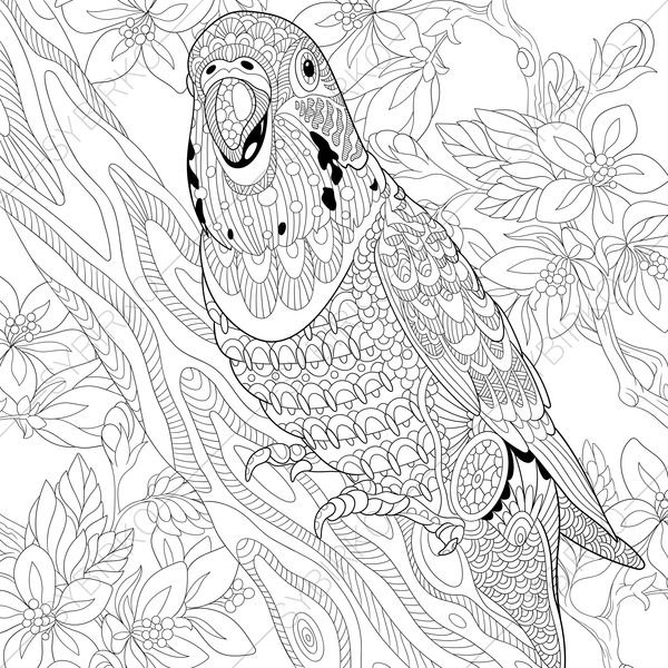 600x600 Budgie Parrot Coloring Pages Animal Coloring Book Pages