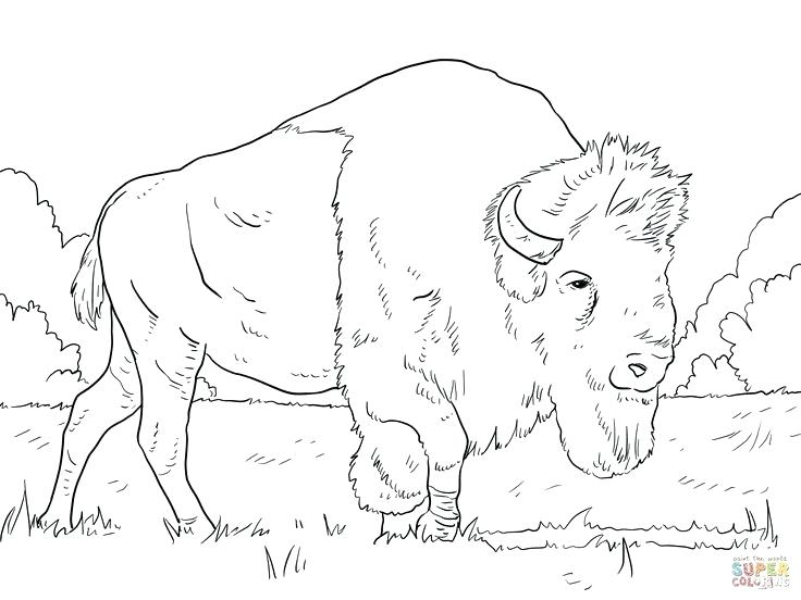 736x552 Buffalo Coloring Pages Buffalo Coloring Book Buffalo And Bison