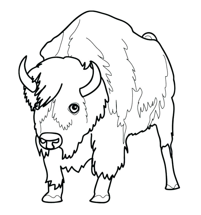 768x818 Bison Coloring Page