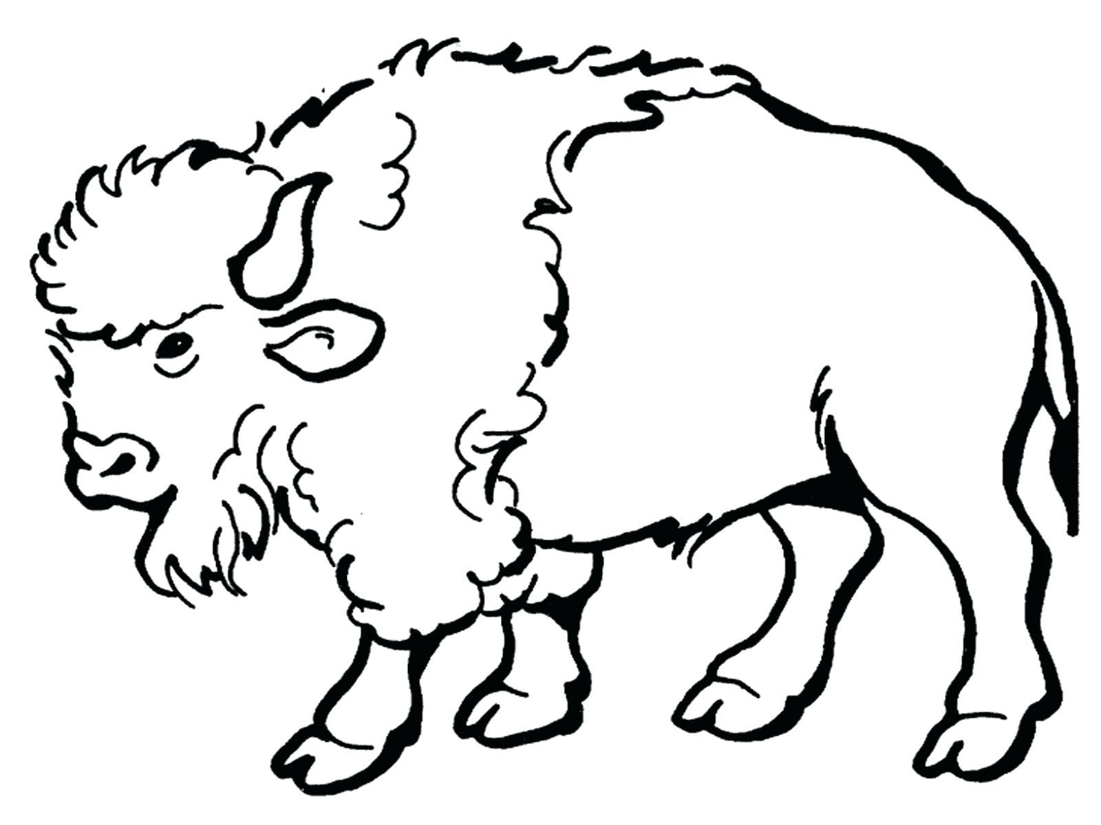 1600x1200 Buffalo Coloring Page