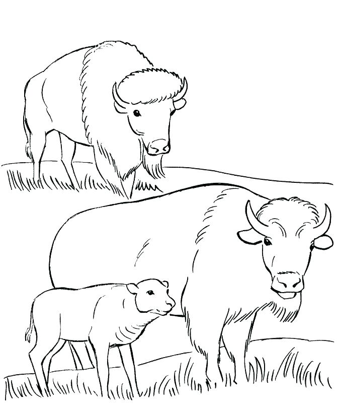 670x820 Buffalo Coloring Page Buffalo Coloring Page Coloring Page Bison
