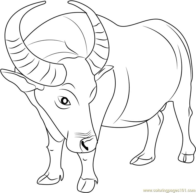 800x787 Buffalo Coloring Page