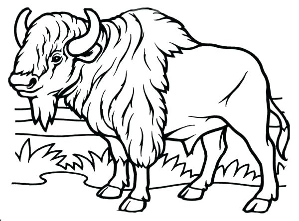 600x444 Buffalo Coloring Page Bison Coloring Pages Bison Coloring Page