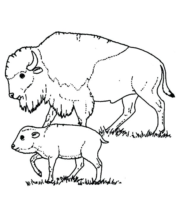600x734 Buffalo Coloring Page Bison Coloring Pages Bison Taking Care