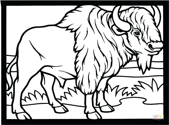 720x533 Buffalo Coloring Page Here Are Buffalo Coloring Page Pictures