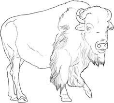 236x214 Click To See Printable Version Of American Buffalo