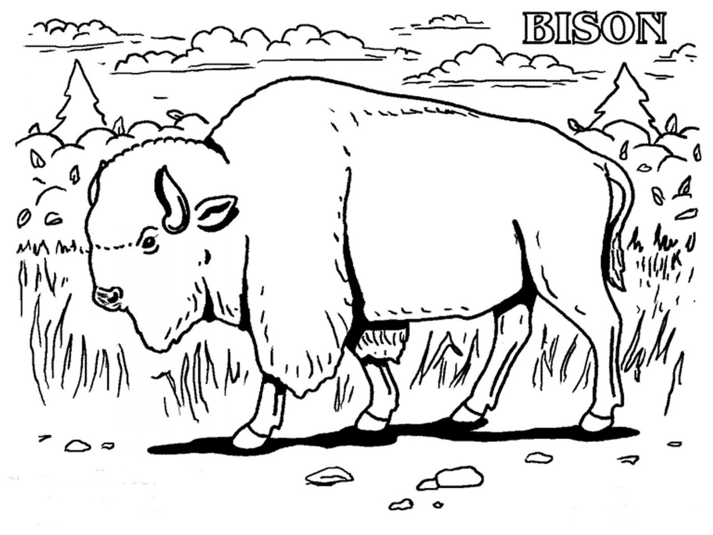 1400x1050 African Buffalo Clipart Coloring Page Pencil And In Print Pages