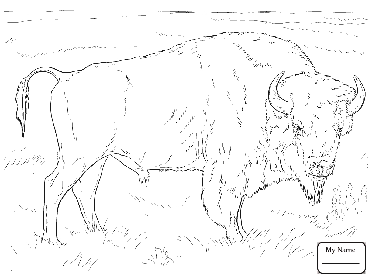 1224x918 New American Bison Coloring Pages Design Printable Coloring Sheet