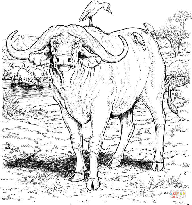 676x720 Unusual Design Ideas Buffalo Coloring Pages Printable Page