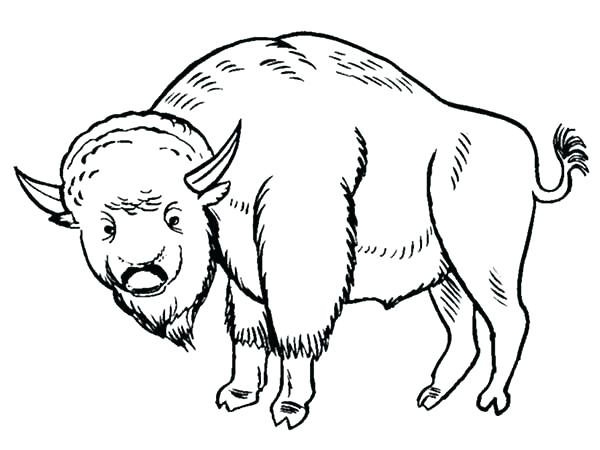 600x450 Bison Coloring Pages Buffalo Coloring Pages Bison Coloring Page