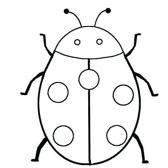 564x564 Drawn Bug Creepy Insect Pencil And In Color Drawn Bug Creepy
