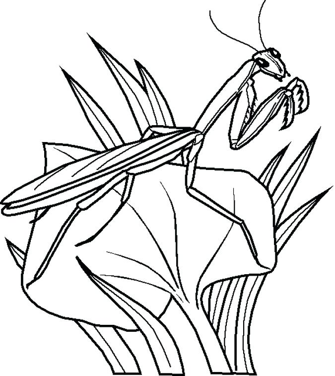 675x757 Coloring Pages Of Bugs Bugs Bunny Coloring Page Ladybug Girl
