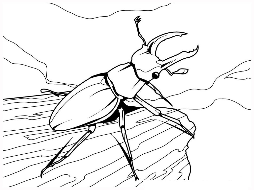 1024x768 Attractive Inspiration Bug Coloring Pages To Print For Kids