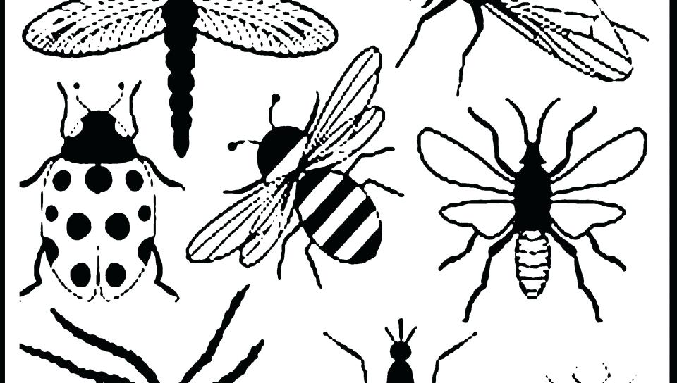 960x544 Insects Coloring Sheets Bugs And Insects Coloring Pages Printable