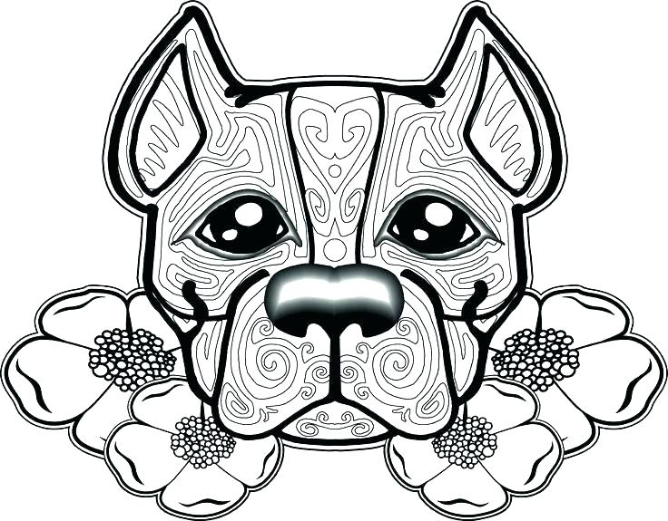 736x575 Bull Coloring Page Coloring Pages Pin Pit Bull Coloring Page