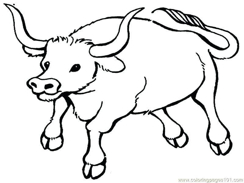 800x600 Bull Coloring Pages Bucking Bull Coloring Pages